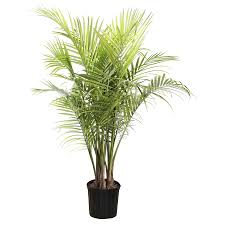 shop 1 94 gallon majesty palm ltl0062 at lowes com flora
