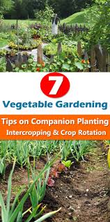 gardening tips home outdoor decoration