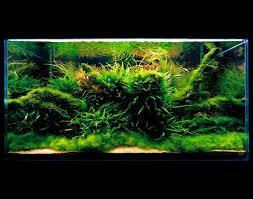 membuat aquascape bening ada nature aquarium aquascape the green machine aquascaping