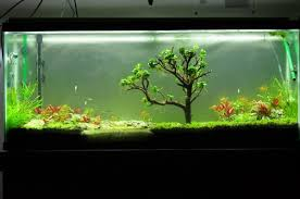 is there any moss that doesn u0027t grow upwards plantedtank
