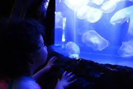 Zoo Light Houston by Summer Bucket List 2015 Houston Zoo Magnolia Pool U0026 Finger
