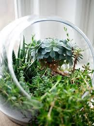 growing a terrarium