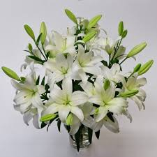 white lillies white asiatic lilies asiatic lilies tulips
