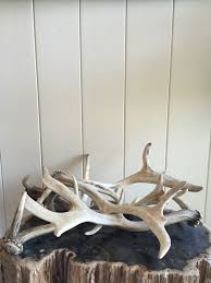 deer antler eclectic find antler deer antler interior decor