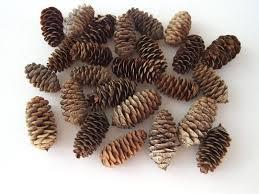 small pinecones real pinecones natural christmas decor winter