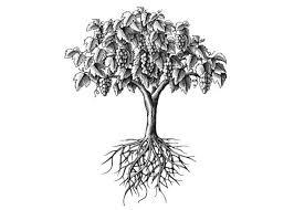 steven noble illustrations vine tree