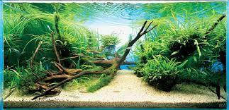 Nature Aquascape The Art Of Aquascaping Blessings Aquarium Shoppe