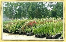 Bushes For Landscaping Best Landscaping Plants And Bushes Front Yard Decor Landscaping