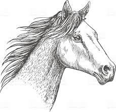 horse head pencil sketch strokes portrait stock vector art