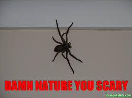 Damn Nature You Scary Meme - australian spiders page 2