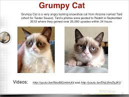 Original Grumpy Cat Meme - cat memes 2011 2012