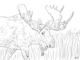 moose bull coloring free printable coloring pages