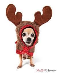 Dog Halloween Costumes Girls 25 Moose Costume Ideas Deer Costume Diy