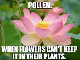 allergies to pollen ruining your day why we at sticky jewelry