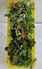 indoor vertical succulent garden wall vertically or horizontally