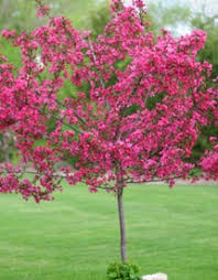 Good Backyard Trees by 425 Best Trees U0026 Shrubs Images On Pinterest Landscaping Ideas