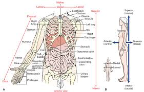 Why Is Anatomy And Physiology Important Organization Of The Human Structure And Function Nursing Part 1