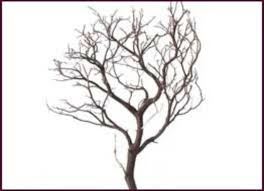 wholesale decorative branches manzanita and botanical products