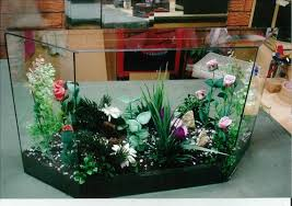home terrarium aquarium production and sale business for sale in