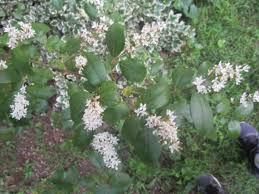 identify small tree ask an expert