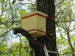 How To Make A Top Bar Beehive Swarm Traps And Bait Hives Natural Beekeeping