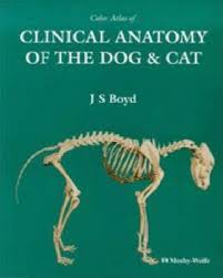 Dog Anatomy Book Colour Atlas Of Clinical Anatomy Of The Dog And Cat J S Boyd