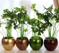 home decor with plants top 3 lucky plants to uplift your home décor bring good luck in