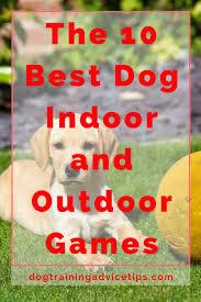 best 25 dog games ideas on pinterest diy dog toys dog