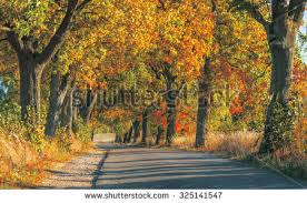 gold colored autumn trees line road stock photo 40379188