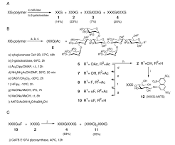 kinetic analysis using low molecular mass xyloglucan