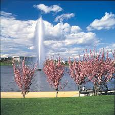 canberra native plants lake burley griffin canberra http www holidaysforcouples travel