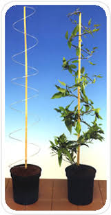 Support For Climbing Plants - climbing plant support climbing plants indoor climbing plants