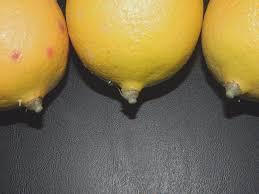 vintage lemons fake food fruit home decor staging props display