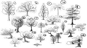 20 tree sketches by elidcamacho on deviantart