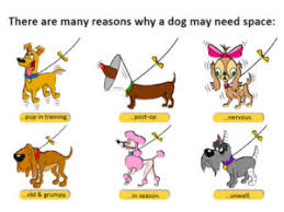 dog ribbon what does a yellow ribbon on a dog s collar noses