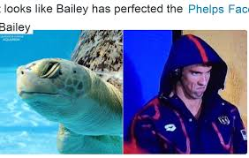 Michael Phelps Meme - funniest michael phelps face memes from the rio olympics forge