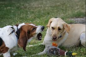 dog barks when we leave 6 tips for training your territorial dog rover com