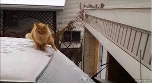 Grumpy Cat Snow Meme - grumpy jedi grumpy cat know your meme