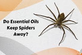 How To Keep Spiders Out Of Your Bed Do Essential Oils Keep Spiders Away Organic Aromas