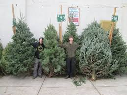 christmas tree for sale selling christmas trees in lansdowne pa for 40 years