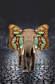 elephant with butterfly wings stock image image of fauna insect
