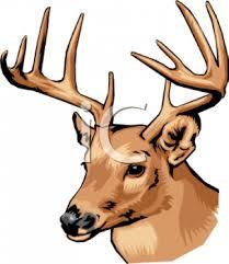 deer head deer head royalty free clipart image
