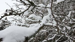 winter landscape snow covered forest white fluffy tree branches