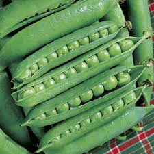 green arrow pea seeds from park seed