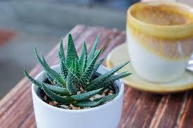 plantes chambre 5 plantes pour purifier votre chambre aloe vera garden