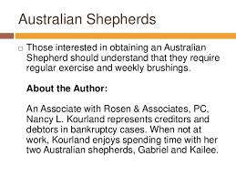 l australian shepherd nancy l kourland discusses australian shepherds