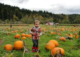 Central Point Pumpkin Patch Oregon by 15 Western Washington Farms Parks Hikes To Enjoy This Fall