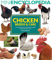 Best Backyard Chicken Breeds by Mini Encyclopedia Of Chicken Breeds And Care A Color Directory Of