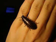 Baby Roaches In Bathroom How To Get Rid Of Baby Roaches In Kitchen U0026 Bathroom Identyfing