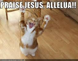 Jesus Cat Meme - in other news mental in the midwest